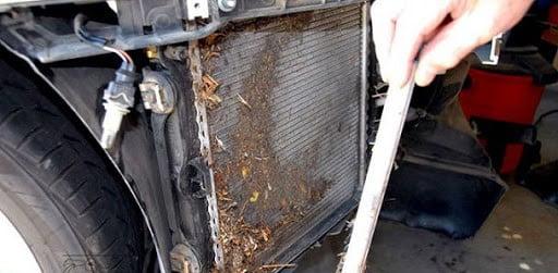 پاک کردن حشرات از رادیاتور